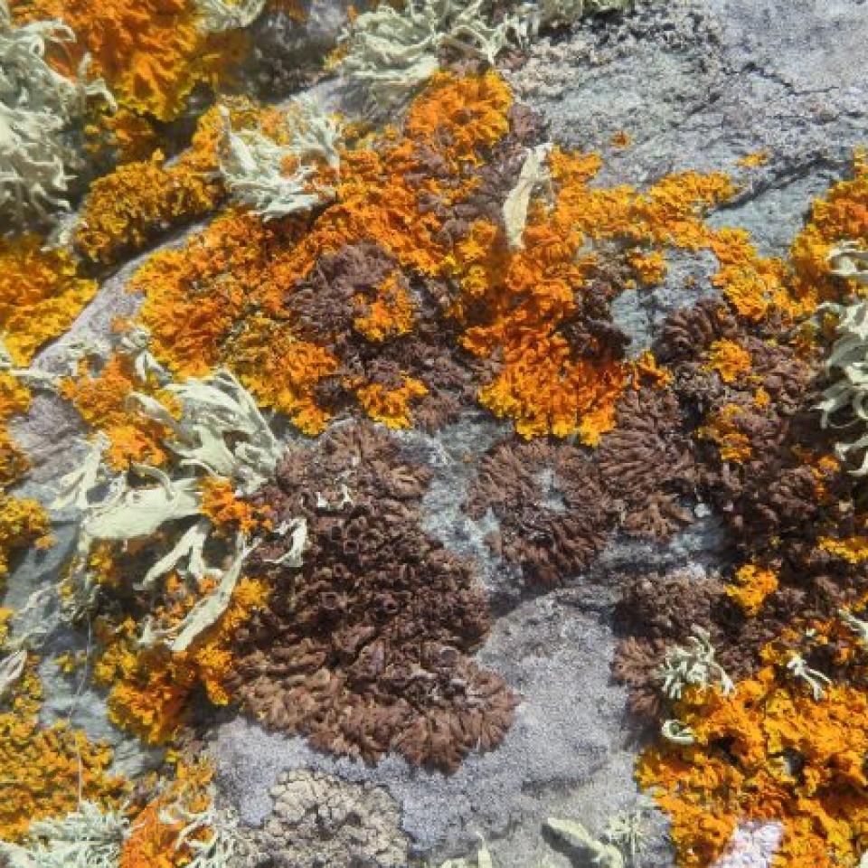 Caro Wilson (Autumn lichen)